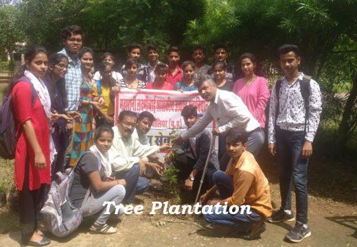 Tree Plantation